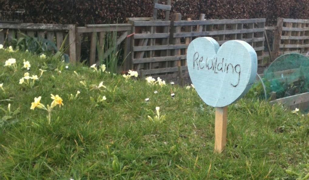 Rewilding Blue Heart